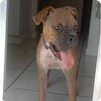 Adopt A Pet :: Hennessey - Miami, FL