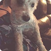 Adopt A Pet :: Kooks - Playa Del Rey, CA