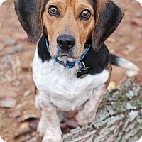 Adopt A Pet :: Toby - Knoxville, TN