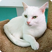 Adopt A Pet :: Toby - Fairfax, VA