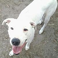Adopt A Pet :: Dina - Pembroke, GA