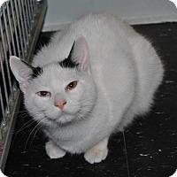 Adopt A Pet :: Sassy - Parsons, KS