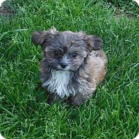 Adopt A Pet :: Willow - Conesus, NY