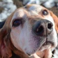 Adopt A Pet :: Walker - Amelia, OH