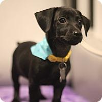 Adopt A Pet :: Brunswick - San Diego, CA