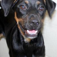 Adopt A Pet :: Beamer - Victoria, TX