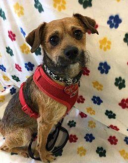 Terrier (Unknown Type, Medium) Mix Dog for adoption in sylmar, California - Kirby