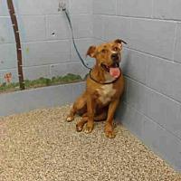 Adopt A Pet :: A506664 - San Bernardino, CA