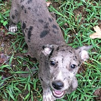 Adopt A Pet :: Evelina - Trenton, NJ