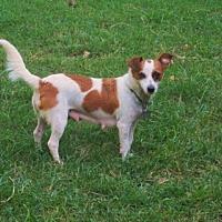 Adopt A Pet :: LUNA - Portland, ME