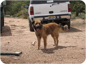 Shepherd (Unknown Type)/Retriever (Unknown Type) Mix Dog for adoption in Roosevelt, Utah - Shealon