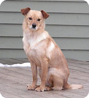 Terrier (Unknown Type, Medium) Mix Dog for adoption in Hastings, New York - Ellie Paige