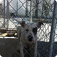 Adopt A Pet :: patches - Donaldsonville, LA