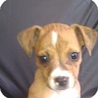 Adopt A Pet :: Sasha - Silver Lake, WI