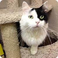 Adopt A Pet :: Oreo - St. Petersburg, FL