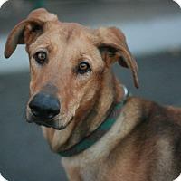 Adopt A Pet :: Bella - Canoga Park, CA