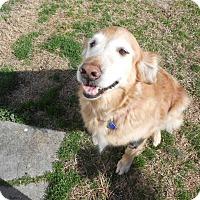 Adopt A Pet :: India Jade - Yorktown, VA