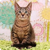 Adopt A Pet :: Herbert - Sterling Heights, MI