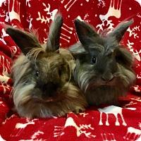 Adopt A Pet :: Truffle & Peaches - Watauga, TX