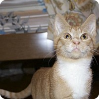 Adopt A Pet :: .Tumeric - Ellicott City, MD