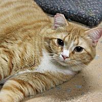 Adopt A Pet :: Fifi - New Richmond,, WI