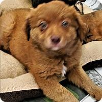 Adopt A Pet :: Franchesca - Cat Spring, TX