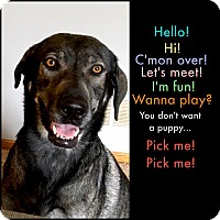 Adopt A Pet :: Marlo - Bloomington, MN