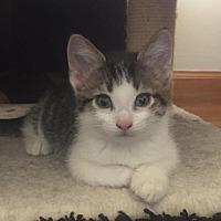 Adopt A Pet :: Jessa - Naperville, IL