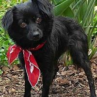 Adopt A Pet :: CALYPSO - Los Angeles, CA