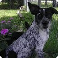 Adopt A Pet :: Thelma - Miami, FL