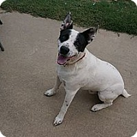 Adopt A Pet :: Jake - Conway, AR