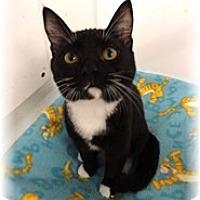 Adopt A Pet :: Lil Bit - Shelton, WA