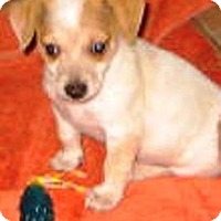 Adopt A Pet :: Christian - Chandler, AZ