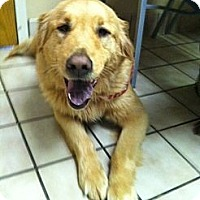 Adopt A Pet :: Mistletoe - Brattleboro, VT