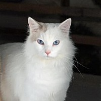 Adopt A Pet :: FROSTHEART - Alamogordo, NM