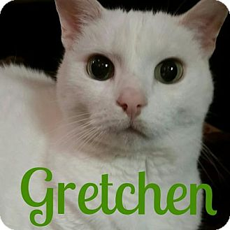 Domestic Shorthair Cat for adoption in Grand Blanc, Michigan - Gretchen
