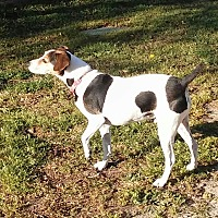 Adopt A Pet :: ROONEY - Wilmington, NC