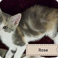 Adopt A Pet :: Rose - Overland Park, KS