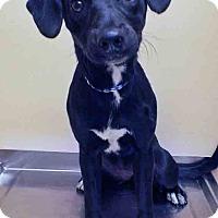 Adopt A Pet :: ADOPTED!!!   Olivia - Oswego, IL