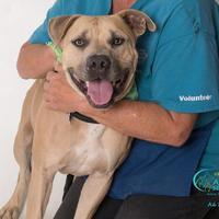 Adopt A Pet :: SMOKEY - Camarillo, CA