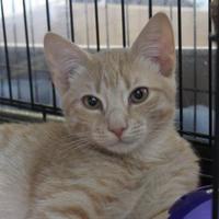 Adopt A Pet :: Fuzzy Wuzzy - Watertown, NY