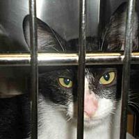 Adopt A Pet :: A756378 - Austin, TX