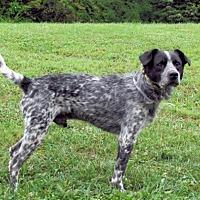 Adopt A Pet :: Smokey - Batavia, OH