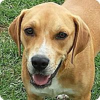 Adopt A Pet :: Cupid - Orange Lake, FL