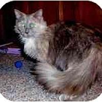 Adopt A Pet :: Malika - Arlington, VA