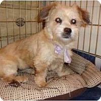Adopt A Pet :: Betty Lou - Madison, WI