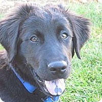 Adopt A Pet :: Sark - Denver, CO