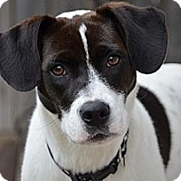 Adopt A Pet :: Roxanne - Hamilton, ON