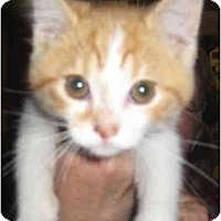 Adopt A Pet :: Joey - Jenkintown, PA