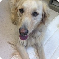 Adopt A Pet :: Francis - Roanoke, VA